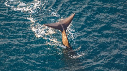 Whale Watching Aerial Photography