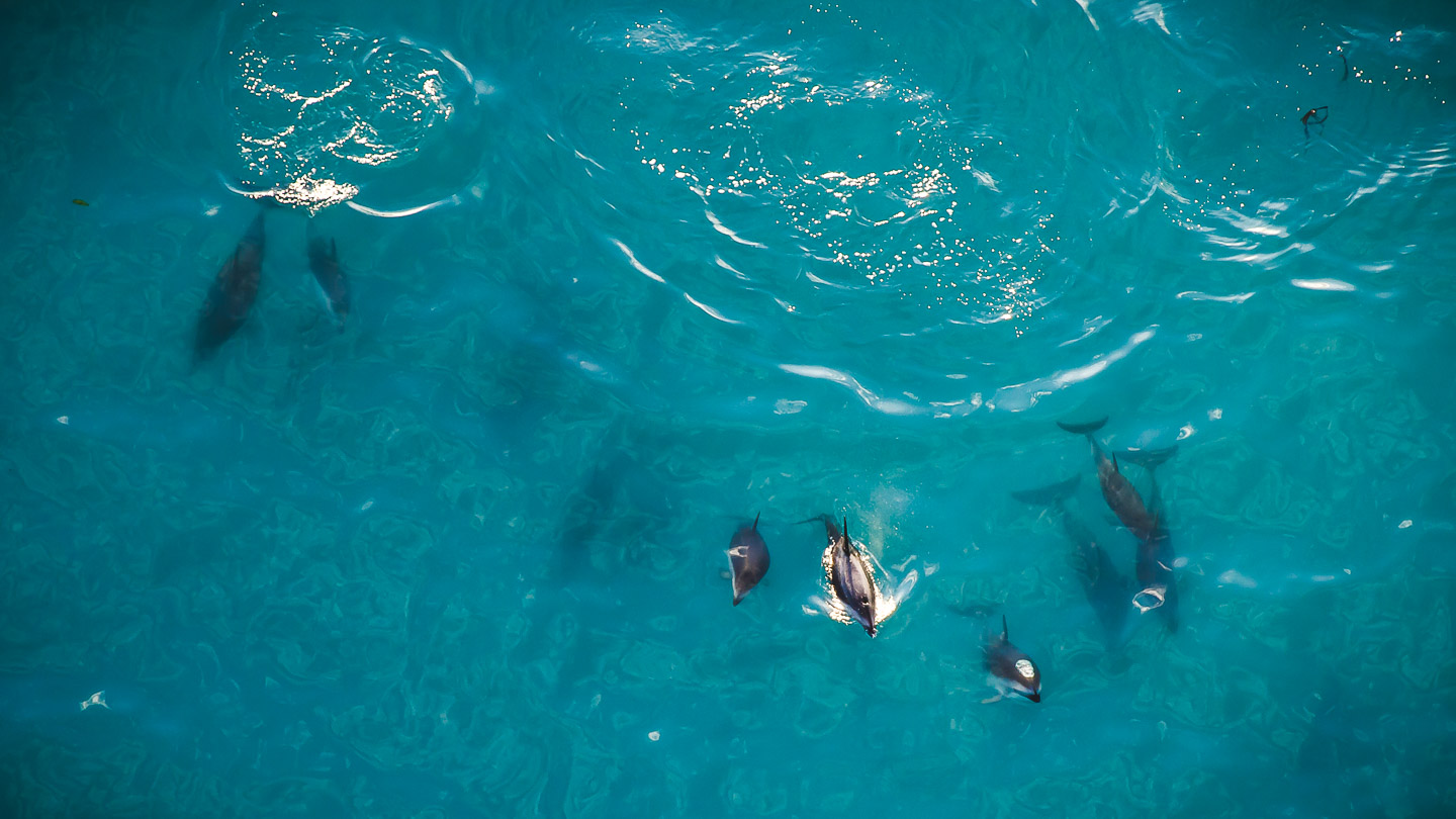 Dolphin Aerial Photography